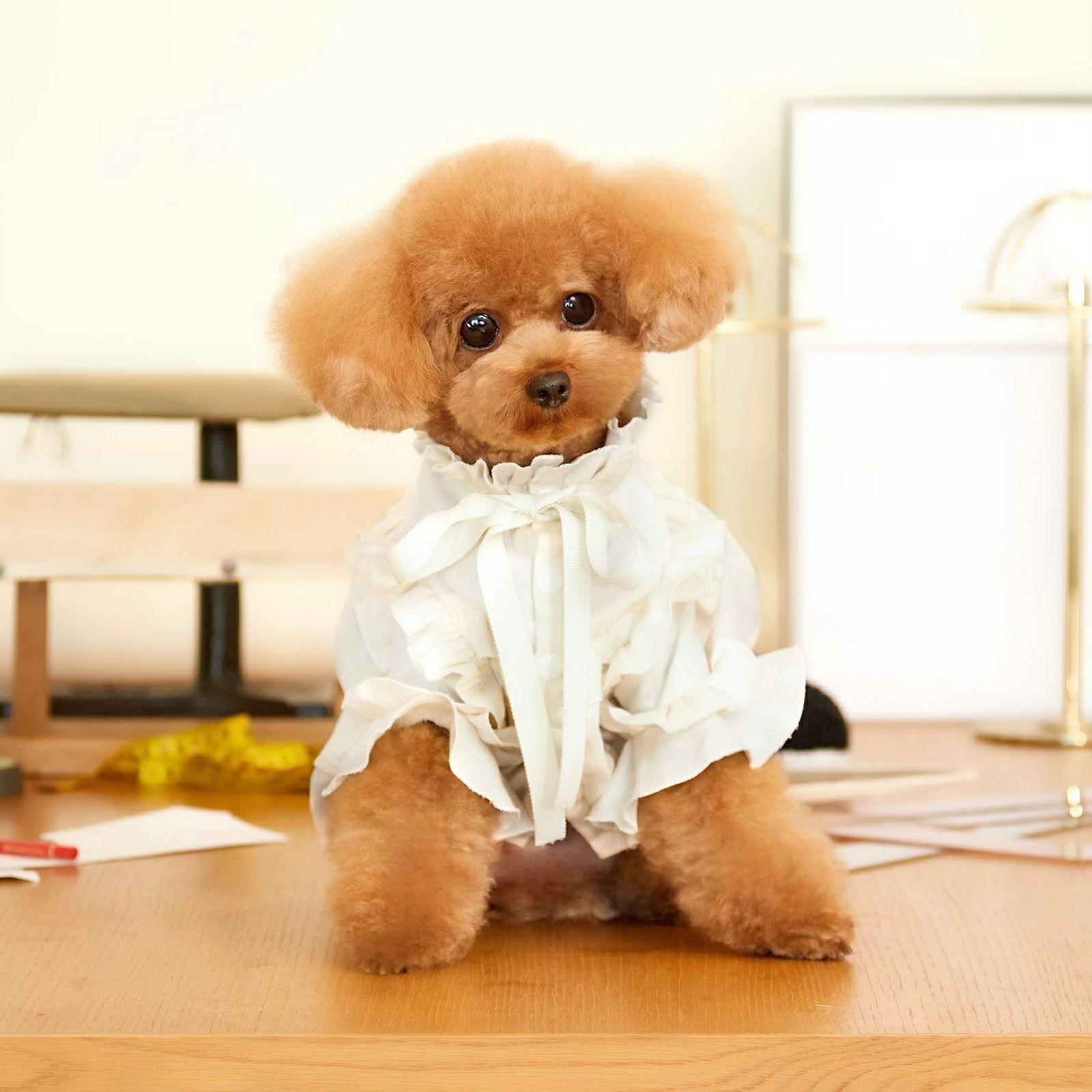 Frilled Gauze Dress Cream